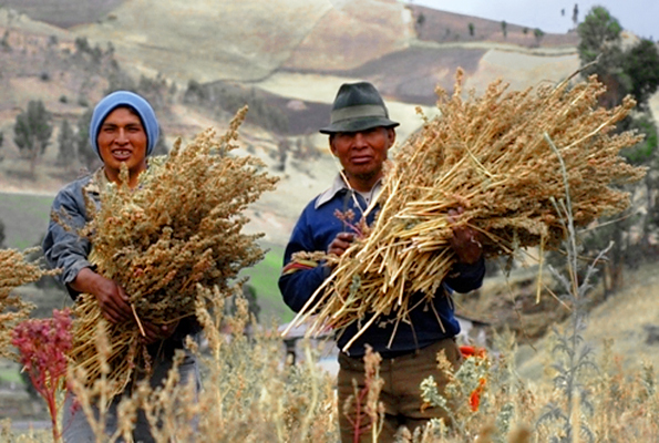 WebReady-FairtradeQuinoa_ArM