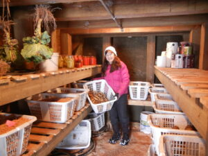 A look into Sandy and Paul's root cellar, showing the shelving and laundry baskets used for vegetable storage. Photo: Paul Hearsey