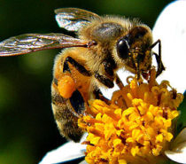 ECOLOGY | WILDLIFE | SCIENCE MATTERS | It's Time to Save the Bees and Ban Neonic Pesticides