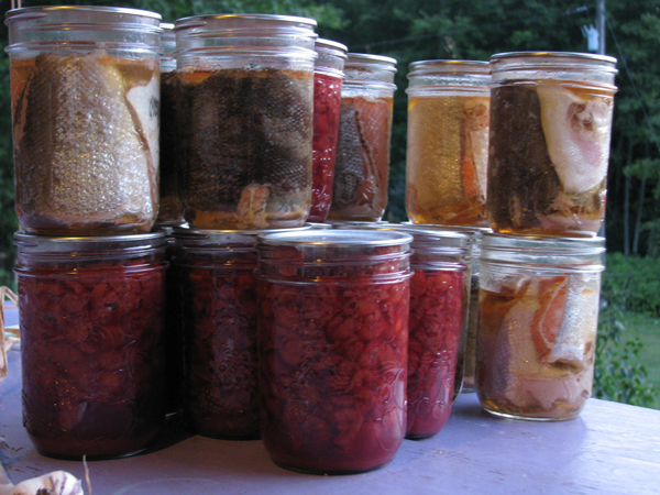 Jars of canned wild salmon and beets. Photo: Lisa Bland