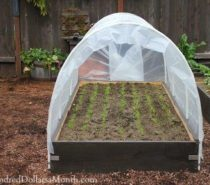 FARM & GARDEN | Dark Days and Cold Nights: Prepping for garden hibernation