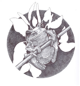 "Ballpoint pen drawings by Ciel Patenaude.  ""Frog & Plantain"""