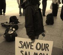 NEWS | ACTIVISM | GMO Salmon