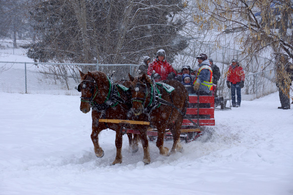 Sleigh rides on a beautiful snowy day delighted visitors at the 2015 Williams Lake Winter Carnival. Organizers are gearing up for 2016 event, and volunteers are welcome to participate! Photo: Jesaja Class