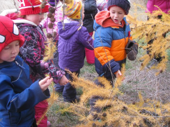 Children at Scout Island explore the impact of fall and winter on tree needles, in an environment where their curiosity guides their learning and where nature is a co-teacher.  Photo: Joan Lozier