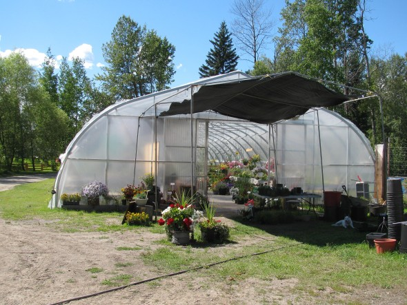 Tomato greenhouse at Franks Plants and Produce in Horsefly. Photo: Carla Bullinger
