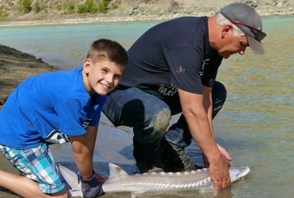 Kolby Croswell and Doug Mooring, nephew and friend of documentary film maker Robert Morberg, enjoy an up-close and personal moment with a Great White Sturgeon at the Fraser River. Photo: Robert Morberg