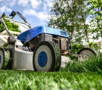 In Pursuit of the Perfect Lawn