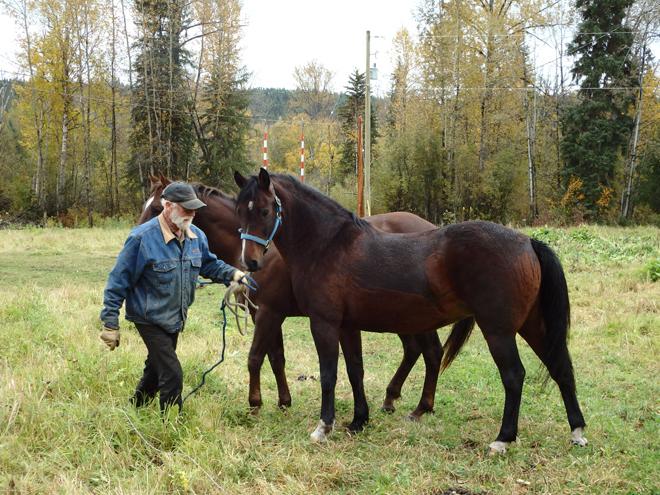 WR-Zirnhelt-2-horses