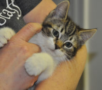 Community | Williams Lake SPCA: Finding animals the best homes