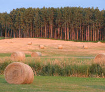 Agriculture: The long View Part 2 – Agrarianism as a Sustainable Vision