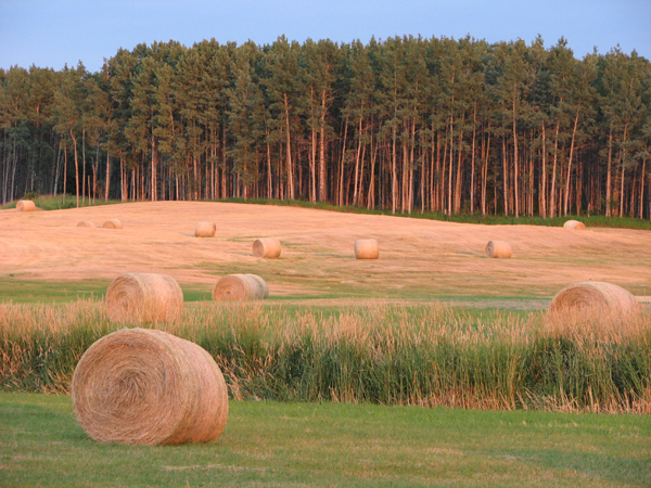 Hay bales dot the landscape near Horsefly, BC. Photo: Lisa Bland