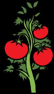 Tomato plant clipart