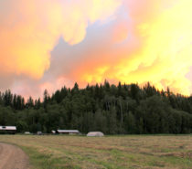 Country Living | Confessions of a Farmer: After the Fires