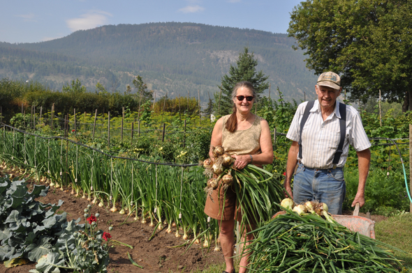 Harvest has arrived at Fraserbench Farm for Lynda Archibald and Charlie Brous Photo: LeRae Haynes