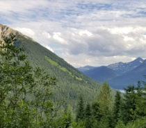 Conservation | Goat River Watershed: Can a gold rush trail save the salmon?