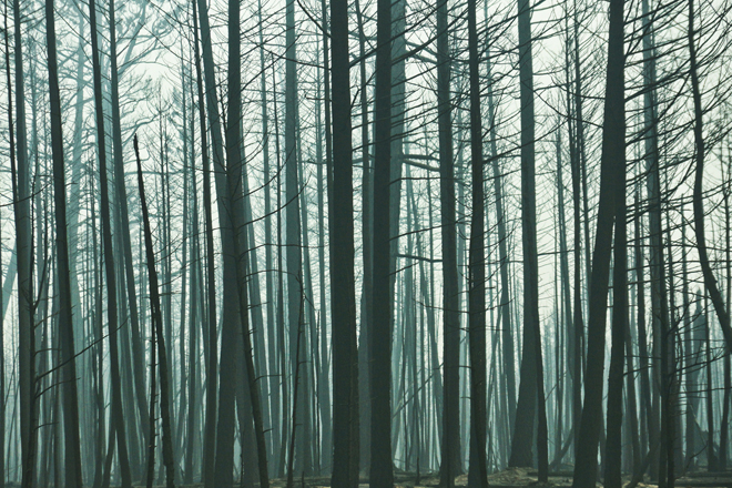 A truly eerie and haunting image of a dark skeleton-like forest. So quiet, you could hear a pin drop, almost as if frozen in time.