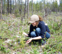 Environment | National Forest Week: A Time to Share Stories