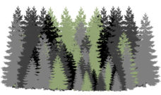 Announcing the BC Coalition for Forestry Reform