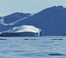 Conservation Conversation: Giving the Arctic a voice in the face of climate change