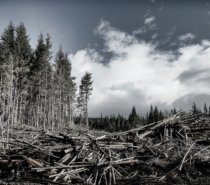 The Final Liquidation – A BC Forest Emergency