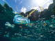 Single-use Plastics Bans to Take Time Despite Multi-Government Support